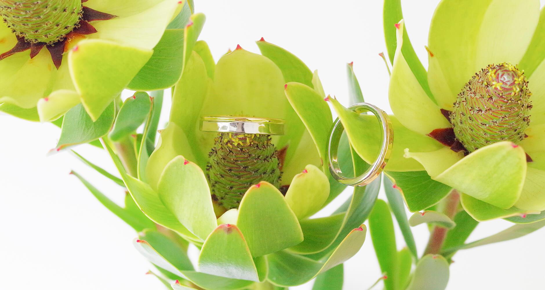 グリーンの植物と2色コンビの結婚指輪
