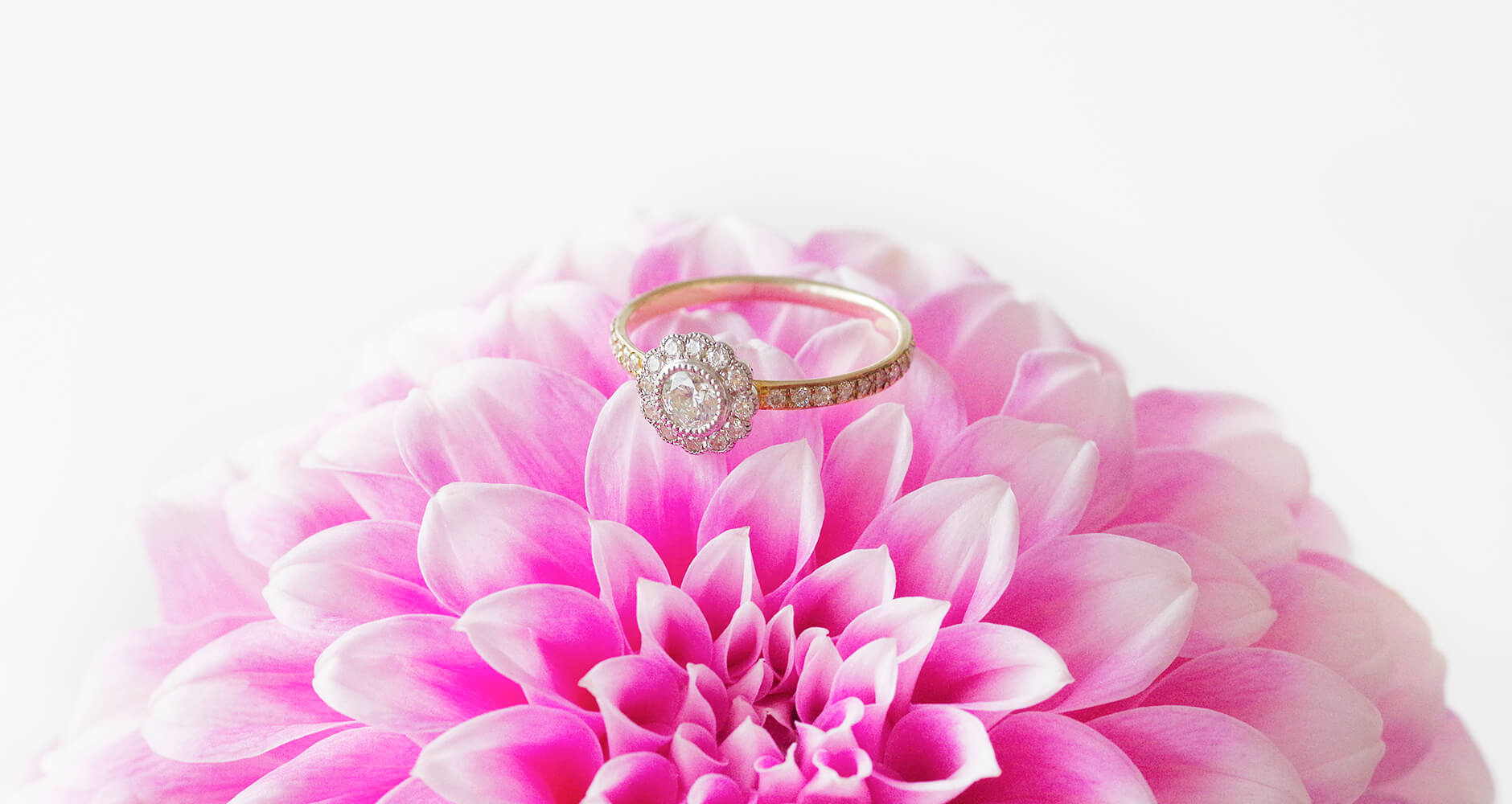 ピンクのダリアと取り巻きの婚約指輪